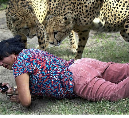 Women has blood on her face after Cheetahs attack her.