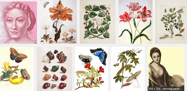 Images for maria sibylla merian metamorphosis.