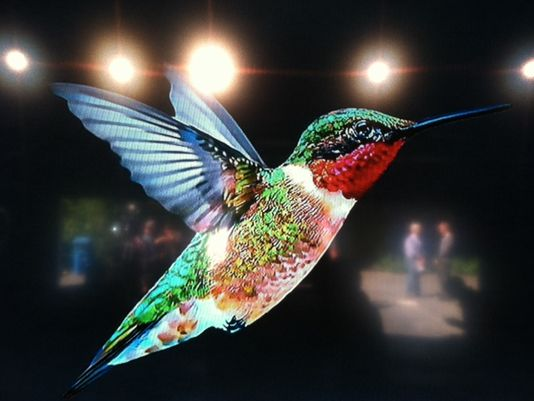 Google's 'Hummingbird.'