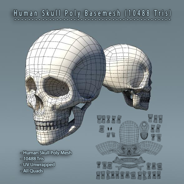 Skull_BaseMesh_590x590_JPG_PREVIEW
