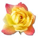 Rose picture code for facebook chat