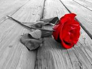 Red rose picture facebook chat code